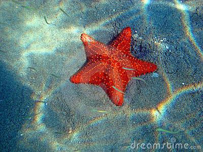 Star Fish Animal Spirit Guide