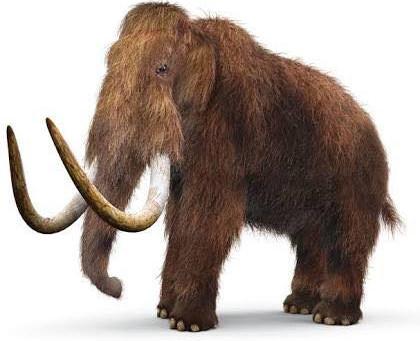 Mammoth Animal Spirit Guide