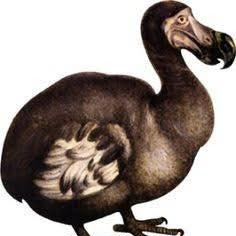 Dodo Animal Spirit Guide