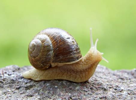 Snail Animal Spirit Guide