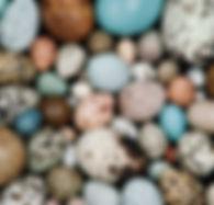 sfw_edd_pigments_frans_lanting.jpg