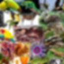 Biodiversity_007.jpg