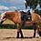 Thumbnail: Glitzer Bandagen aus recyceltem Fleece | in zwei Farbkombis | Pony/Cob und Full