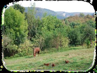 Sad a kůň