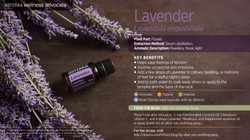 wa-lavender.jpg