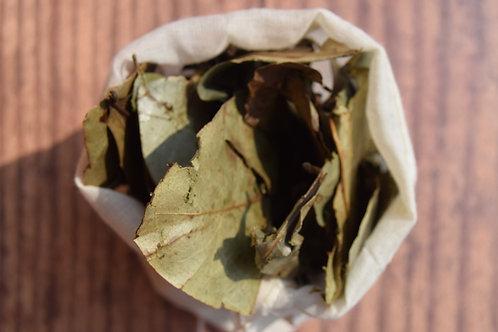 Soursop Leaves - 40 leaves