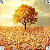 fall-1000-1.jpg