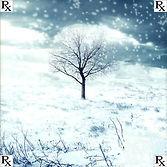 winter-1000.jpg