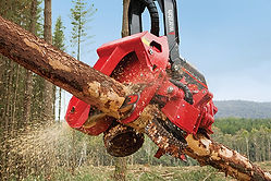 Silviculture Contractor Tasmania, Plantation harvesting, spot cultivation, wilco, mound ploughing, clearing