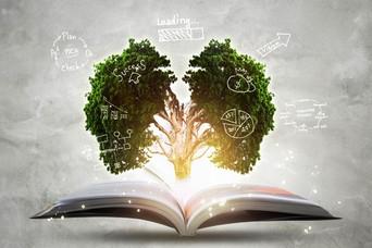 Três hábitos que otimizam a assimilação de informações