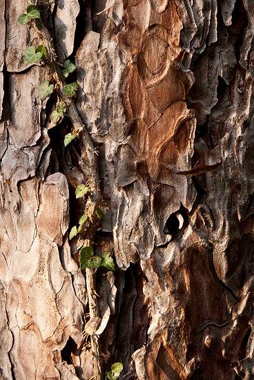 Tree skin 1 | Luca Cortese