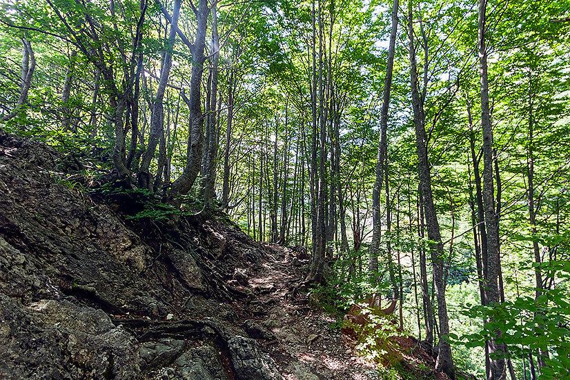 In foresta 10   Gianni Maffi
