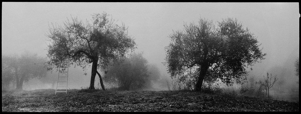 Tuscia 1 | Daniele Vita