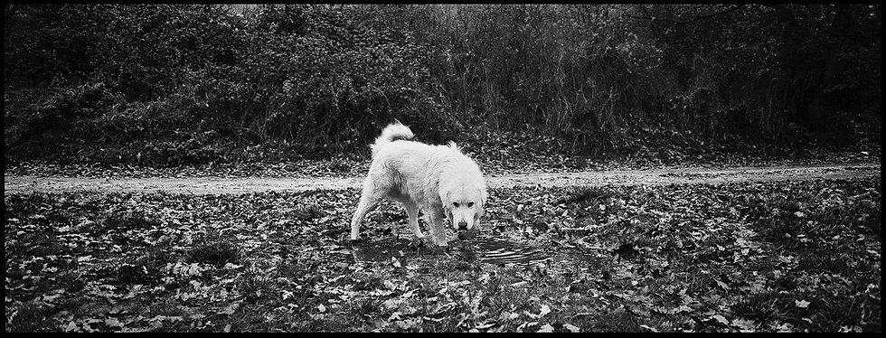 Cane bianco   Daniele Vita