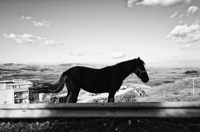 Horse 2 | Daniele Vita