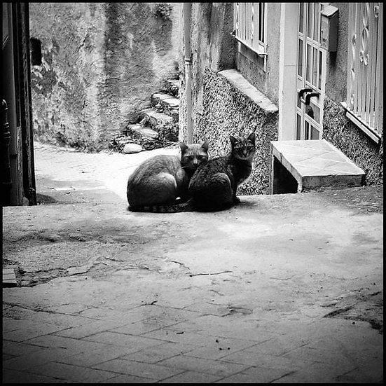 Cats, San Pier Niceto 2015 | Carlo Riggi