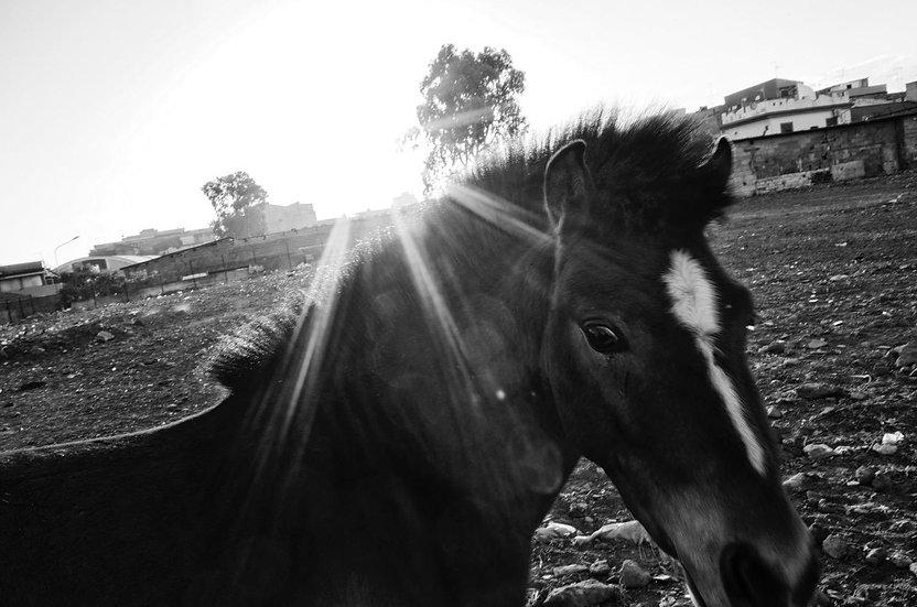 Horse 5 | Daniele Vita