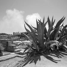 Franco Carlisi_Valle dei Templi 2_70x70