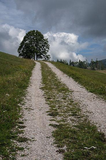 My way | Luca Cortese