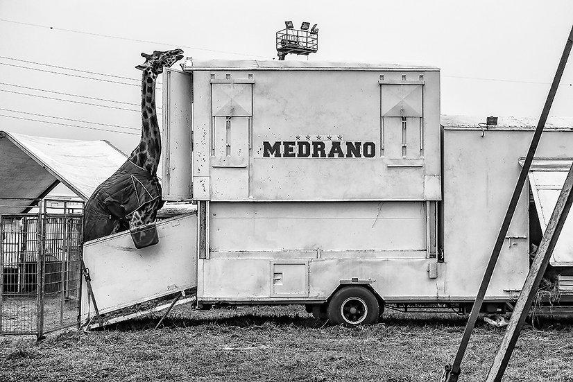 Circo Medrano 2 | Gianni Maffi