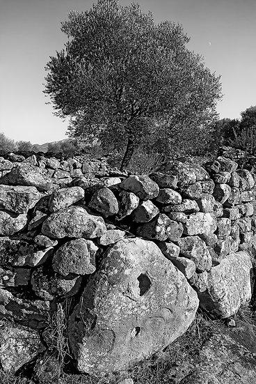 Serra Orrios, Sardegna | Gianni Maffi
