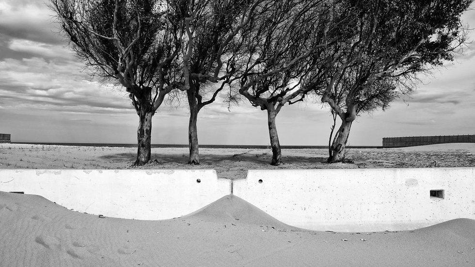Four Trees | Daniele Vita