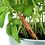 Thumbnail: Dib Dab Sprout Pencil