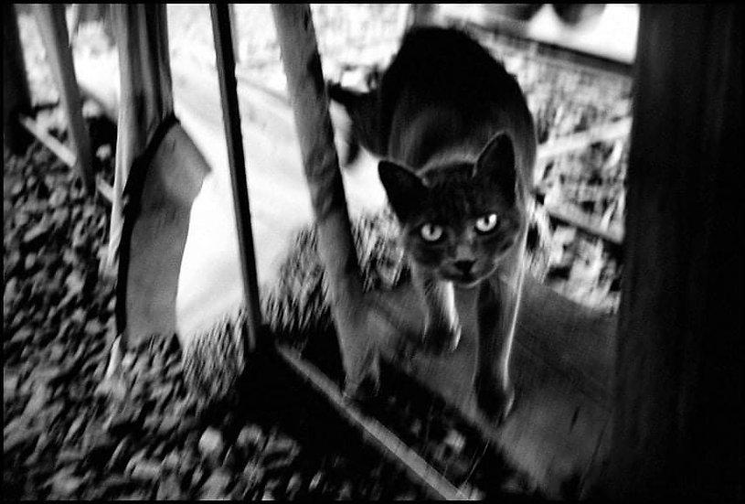 Cat, Milazzo 2010 | Carlo Riggi