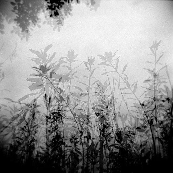 Riflessi e ombre | Carlo Riggi