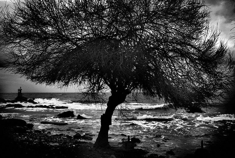 Albero e onde | Carlo Riggi