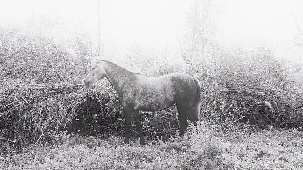 Horse 1   Daniele Vita