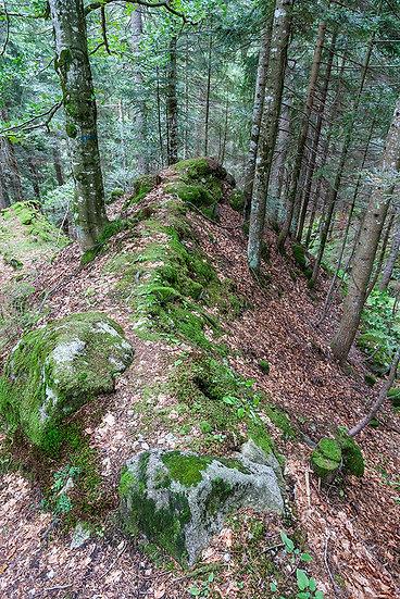 In foresta 2 | Gianni Maffi