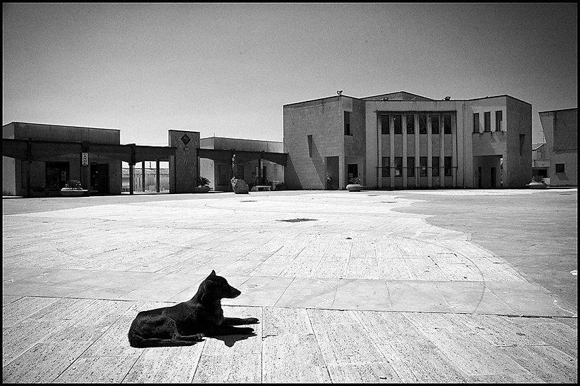 Alone, Salaparuta 2009 | Carlo Riggi