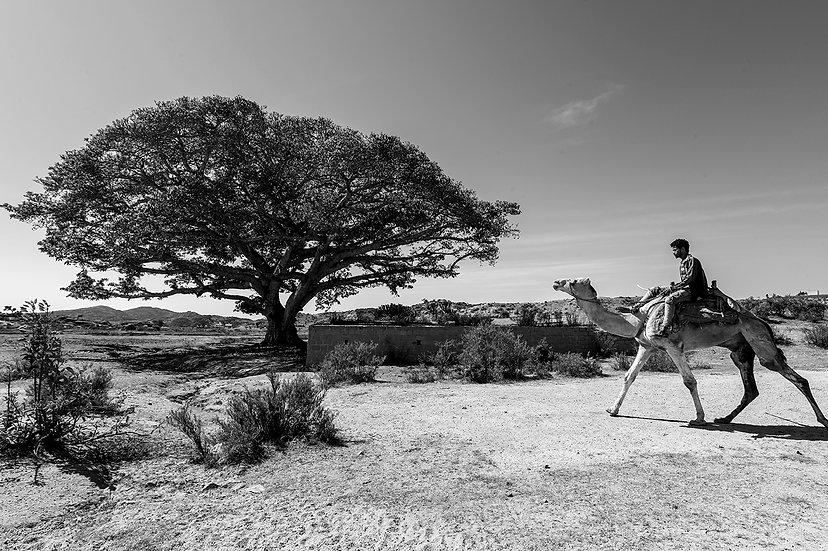 Eritrea 2, Valle dei Sicomori | Isabella Balena