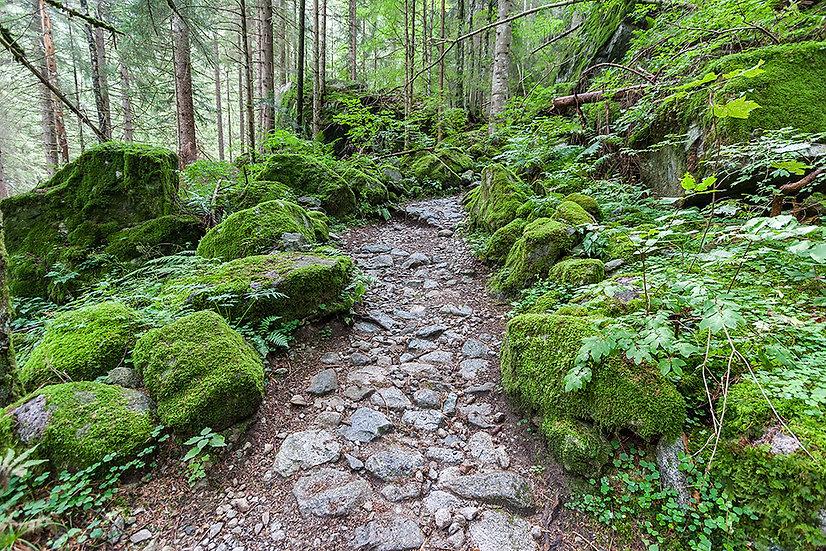 In foresta 7 | Gianni Maffi