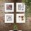 Thumbnail: From the garden: Fiori (1) e Orchidee (1, 2, 3) | Gianni Maffi