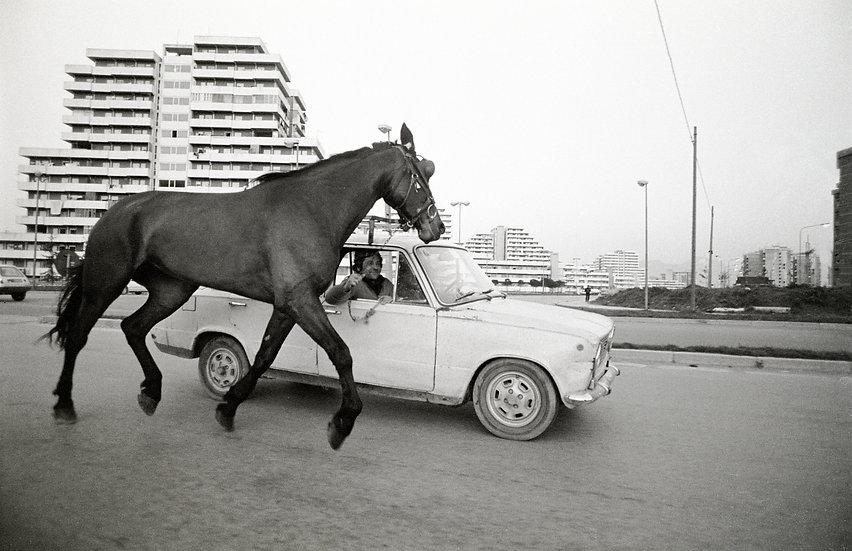 Cavallo al traino, Napoli 2007 | Francesco Cito