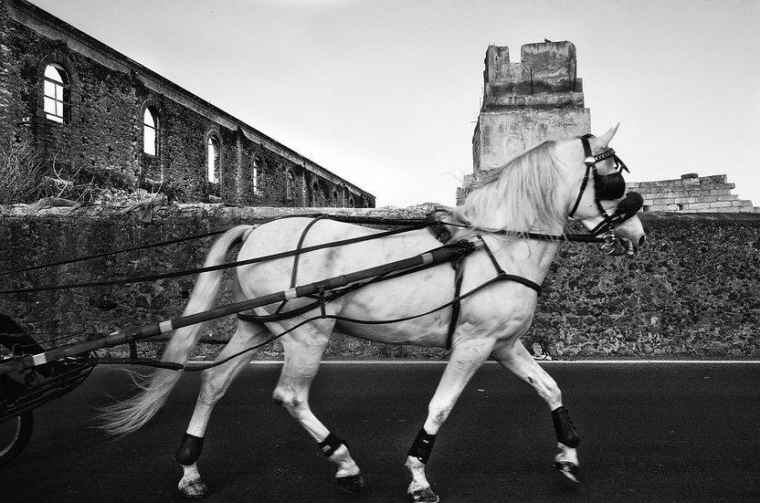 Horse 4 | Daniele Vita