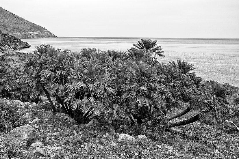 Sicilia, Riserva dello Zingaro | Gianni Maffi