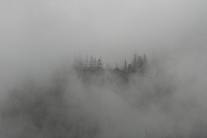 Bosco e nebbia | Luca Cortese