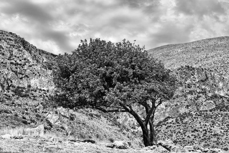 Due (Sicilia, Riserva dello Zingaro) | Gianni Maffi