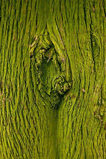 Tree skin 2 | Luca Cortese