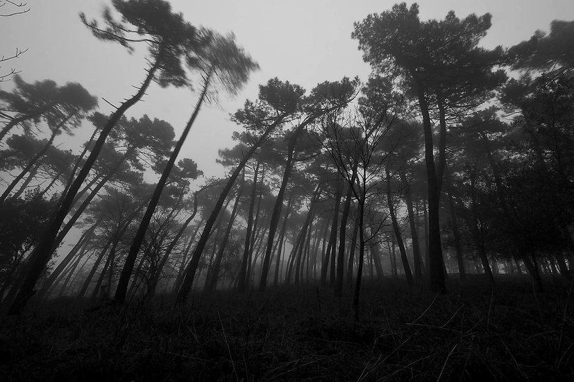 Forest nightmare | Luca Cortese