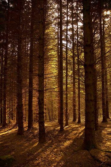 Orange wood | Luca Cortese