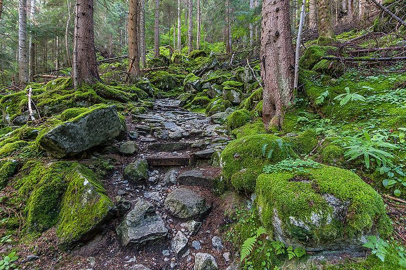 In foresta 8 | Gianni Maffi
