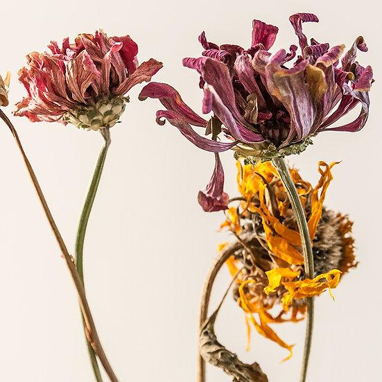 From the garden: Fiori (1) e Orchidee (1, 2, 3) | Gianni Maffi