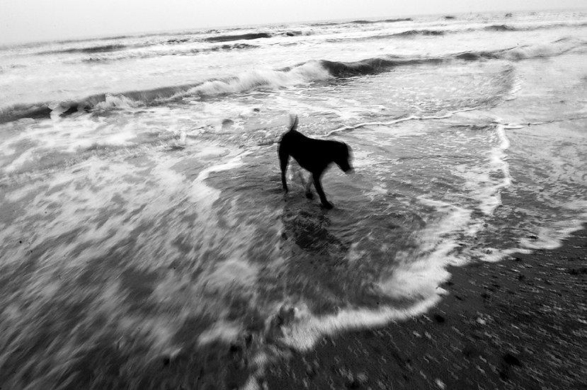 Passeggiata tra le onde, Rimini | Isabella Balena