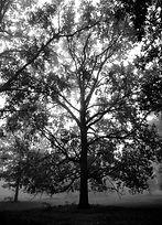 PF_tree-2.jpg