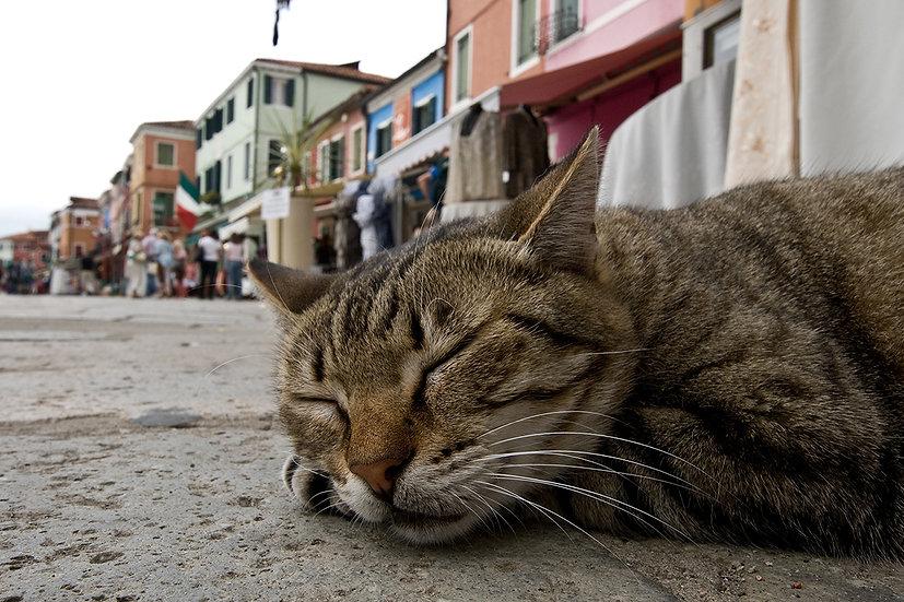 Sleeping in Murano | Luca Cortese