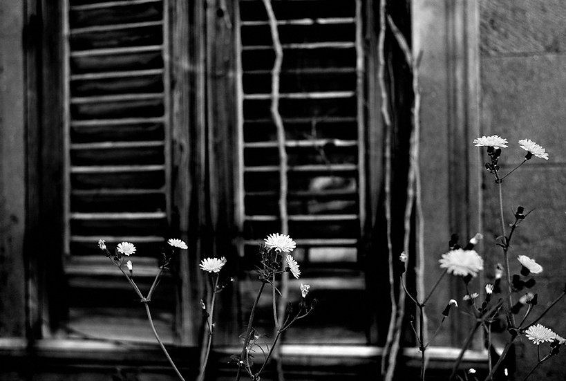 Flowers | Carlo Riggi